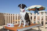 """ESTATE/A Sabaudia spiaggia per cani, con ombrelloni e """"bagnini"""""""