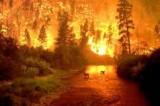 Emergenza incendi nel Lazio, ieri 42 roghi