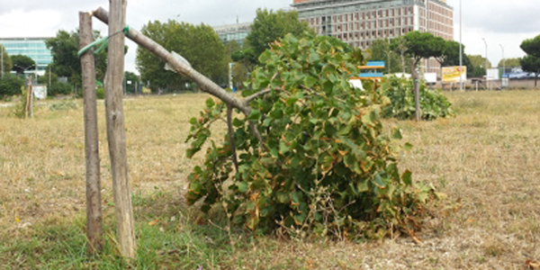 Maltempo, decine di alberi caduti: 164 interventi, nevica in Ciociaria. Ancora allerta per domenica