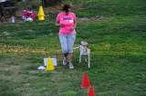 Al Rally Obedience a vincere è l'amore per il cane