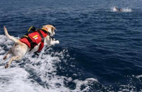 Ostia, si tuffa in mare e rischia di annegare: salvato da due cani-bagnino