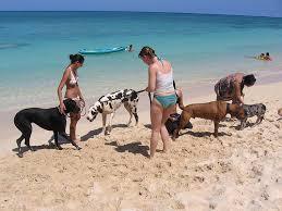 Maccarese, Baubeach: festa di ferragosto in spiaggia dedicata ai cani