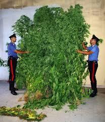 Aveva più di un chilo di marijuana in casa: arrestato un 36enne a Civitavecchia