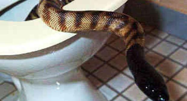 Labico, trova un serpente di due metri nel piatto doccia: paura per una 81enne