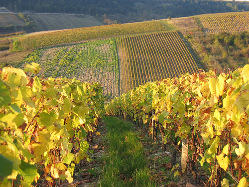 Agricoltura, la Regione finanzia 7 progetti per promuovere il vino del Lazio