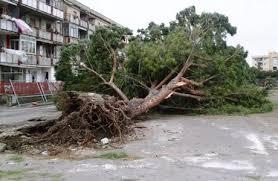 Maltempo: a Fregene cadono tre pini, a Fiumicino un eucalipto