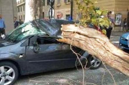 Maltempo, alberi e cornicioni che cadono: 4 i feriti. A Civitavecchia nave contro il molo