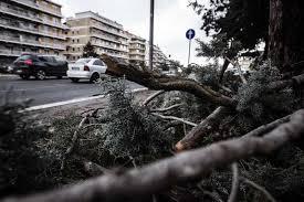 Allarme alberi, la giunta vara un piano per prevenire i crolli: l'ultimo nel pomeriggio all'Ostiense