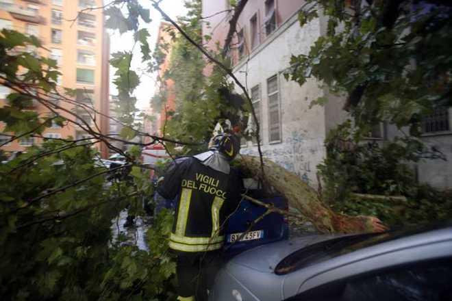 Maltempo, pino cade su un'auto in via Tiburtina: nessun ferito