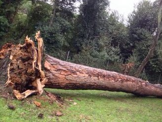 Villa Ada, pino crolla su un'area giochi: distrutta la casetta di legno e parco chiuso per vento. Co...