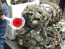 Esquilino, una tonnellata di pesce avariato sequestrata tra i banchi del mercato