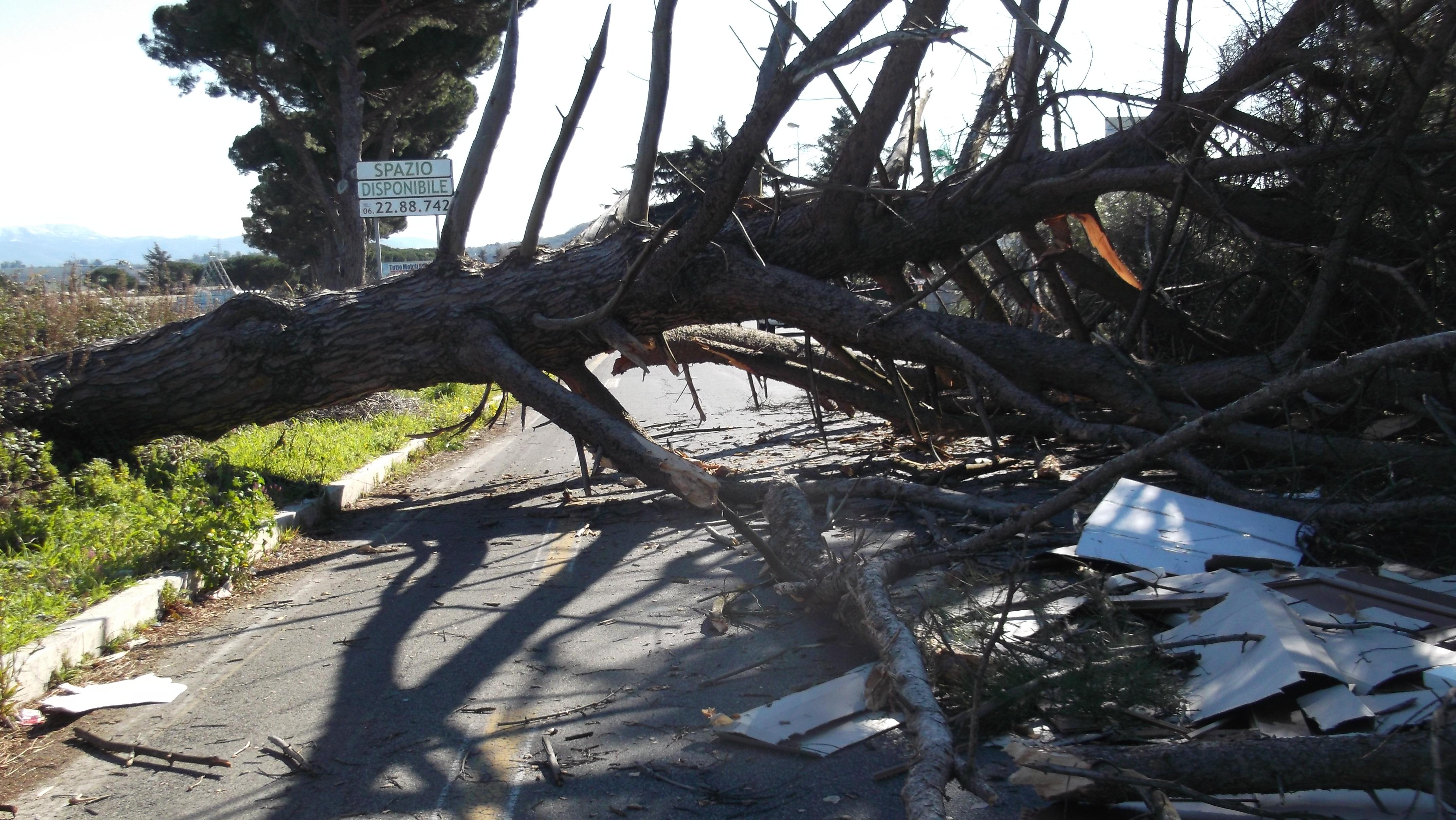 Maltempo, strage di alberi a causa del vento forte