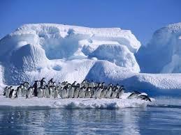 Expo, i ricercatori spiegano ai bimbi come si mangia la Polo sud
