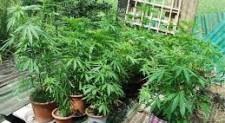 Colleferro: marijuana e metadone pronti per la vendita, un arresto
