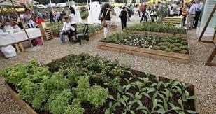 Campidoglio, nell'anno dell'Expo arriva il regolamento sugli orti urbani