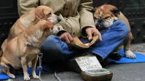 Cani usati per mendicare: 2 denunciati