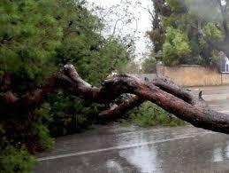 Maltempo, numerosi alberi caduti sul territorio di Fiumicino