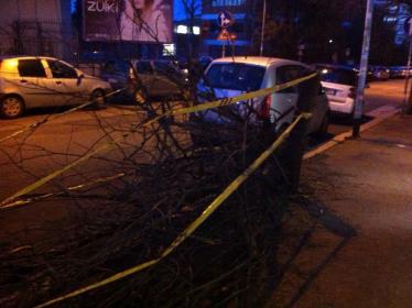Maltempo, rami e alberi caduti: oltre 200 interventi