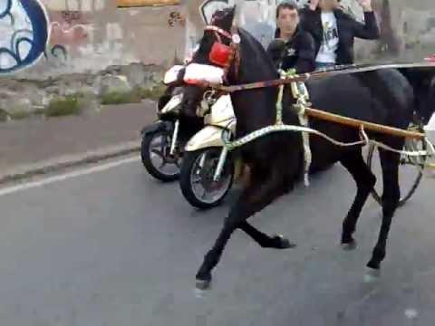 Cassino, corse clandestine di cavalli: 9 denunciati