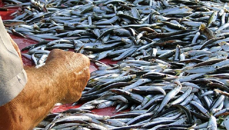 Da Regione Lazio ok a bando Feamp per la Pesca