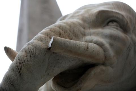 Sfregiato l'elefante del Bernini in piazza della Minerva: rotta una zanna