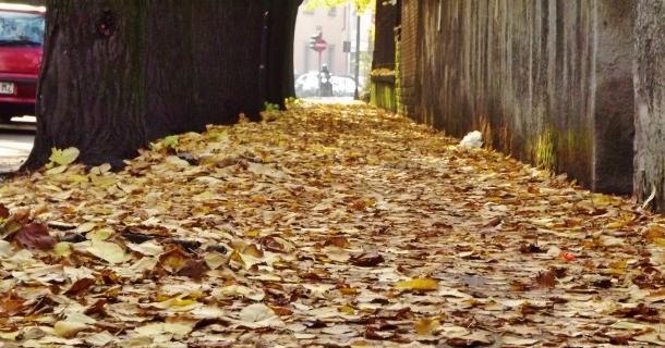 TASK FORCE - Trentaquattro squadre dell'Ama per la rimozione delle foglie da strade e marciapiedi