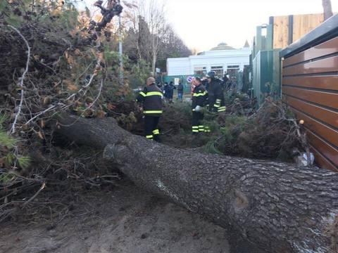 Crolla un albero al Luneur: donna in gravi condizioni