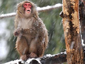 BIOPARCO - Aiuti agli animali per il freddo e il gelo
