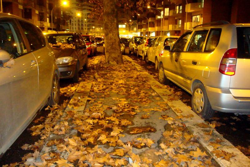 AMA - Piano foglie: Altri mille interventi su strade alberate