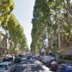Il Campidoglio si arrende, gli alberi affidati ai privati
