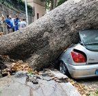 GIANICOLO - Cade albero, danneggiata automobile