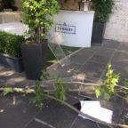 VIA VENETO - Un ramo cade sui tavolini di un ristorante