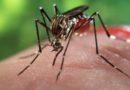 Chikungunya,altri dieci casi