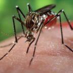Chikungunya nel Lazio. Ci sono 11 nuovi casi, di cui 4 a Roma. Il totale sale a 76