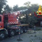 COLLE OPPIO - Cade un albero di 20 mentri su due auto