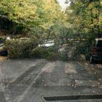 PARIOLI - Alberi in caduta libera, ramo precipita su auto
