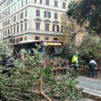 PRATI - Crolla un albero in strada sulla linea 913. Caos e blocco del traffico