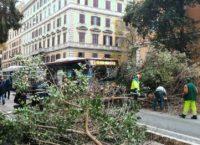 PRATI – Crolla un albero in strada sulla linea 913. Caos e blocco del traffico