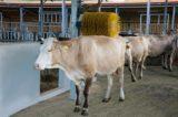 """Regione Lazio, Hausmann: """"14 milioni agli allevatori per il benessere animale"""""""