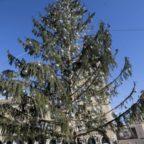 """Sul caso Spelacchio interviene l'Anac: """"E' costato quanto due alberi"""""""