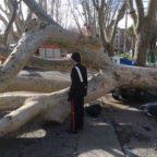 Seicento crolli in sei mesi, è strage di alberi