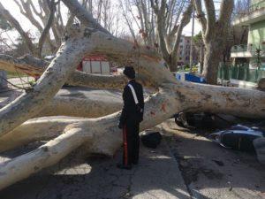 alberi_roma