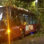 MILIZIE - Albero crolla su Bus Atac, autista ferito