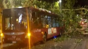 albero autobus4