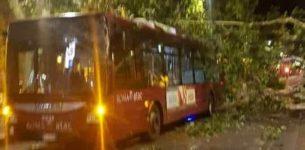 MILIZIE – Albero crolla su Bus Atac, autista ferito