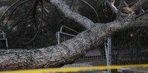 OSTIA -Ramo di 7 metri cade su un'auto in transito: il conducente vivo per un soffio