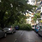 Maltempo: strage di alberi, ferita una coppia.Crolli a Trieste, Montesacro e Talenti