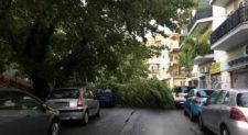 Maltempo: strage di alberi, ferita una coppia.<br>Crolli a Trieste, Montesacro e Talenti