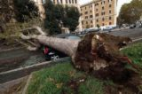 Strage di alberi e traffico in tilt, il vento flagella Roma