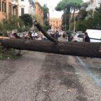 Maltempo, il forte vento fa strage di alberi